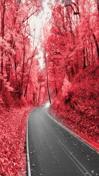 Pink Way Hd