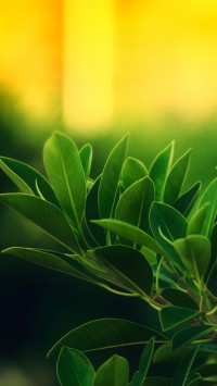 Plants With Sunrise
