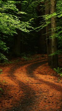 Forest Path Road