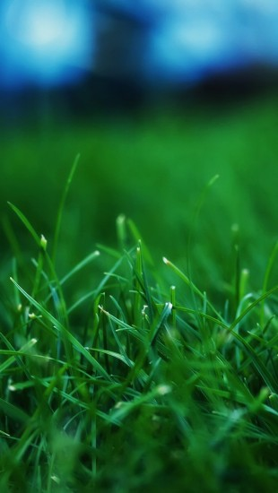 Grass Closeups