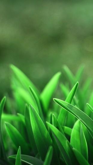 Leaves Closeups