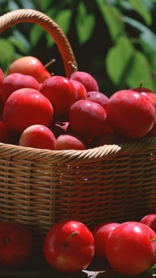 Red Plums In A Basket