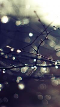Wet Twigs