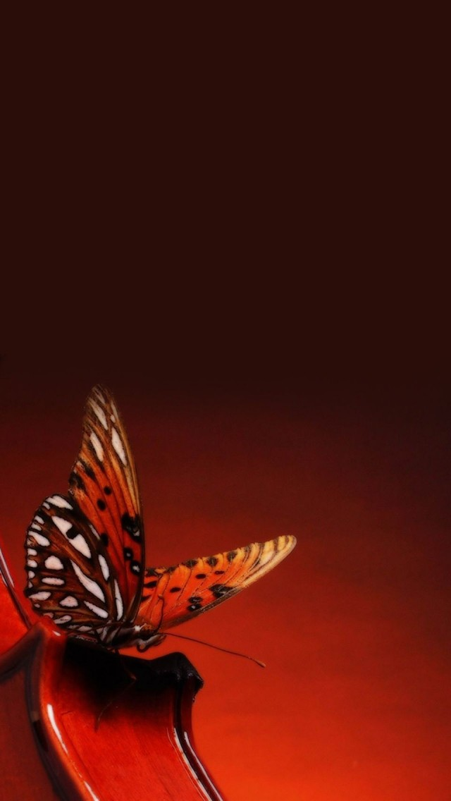 A Butterfly Landing On A Violin The Iphone Wallpapers