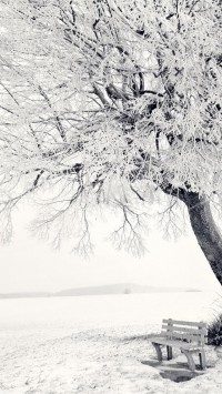 Beautiful Frozen Tree