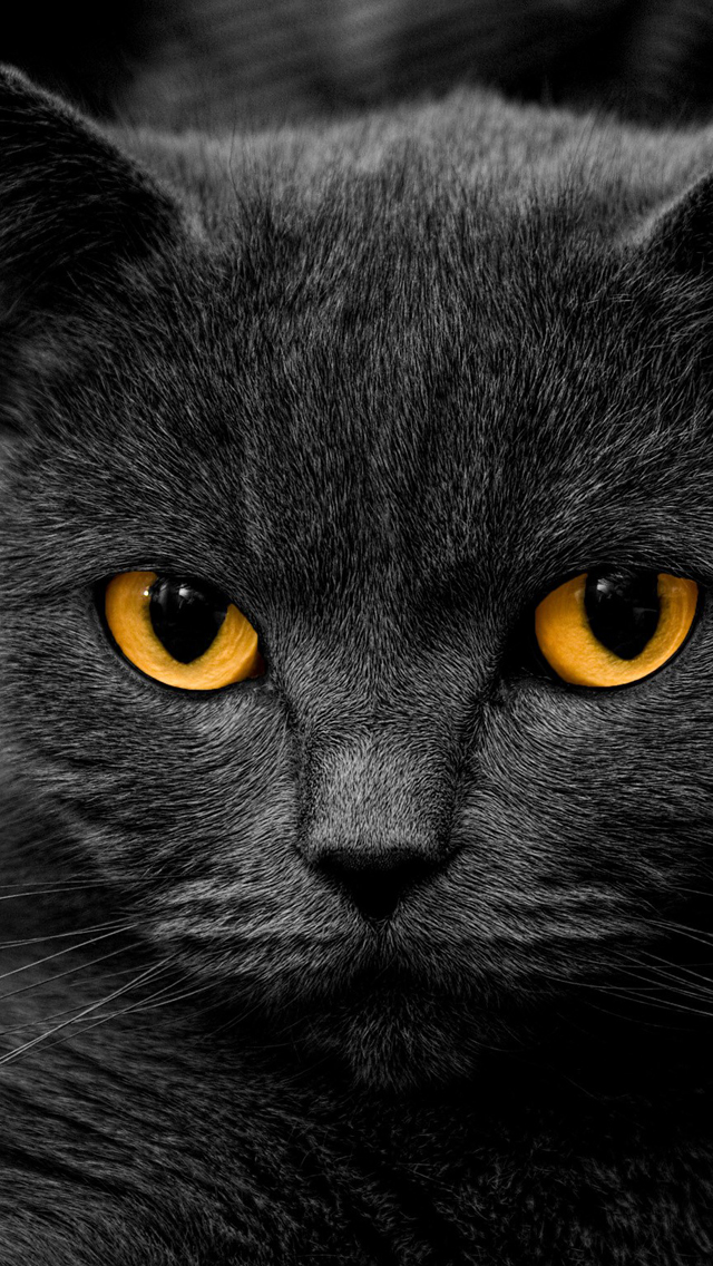 The Iphone Wallpapers Dark British Cat