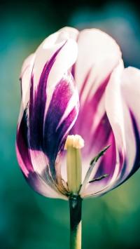 Flower Bokeh Macro