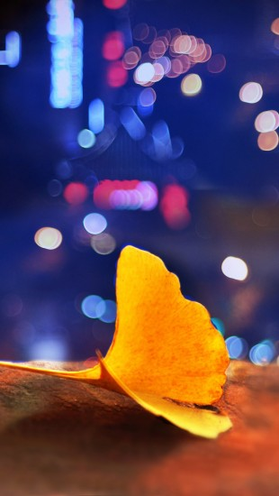 Ginkgo Biloba Light