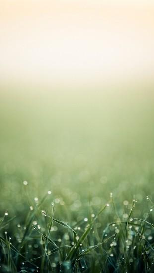Moist Grass Header