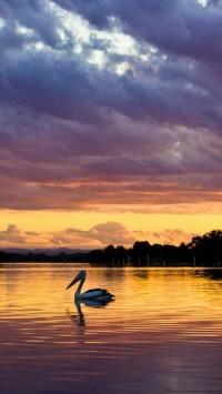 Pelican Animals