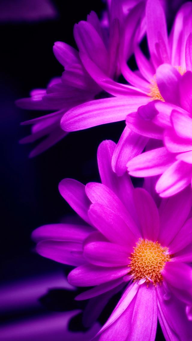 IPhone Wallpaper Tags FlowersPink Pink Flowers