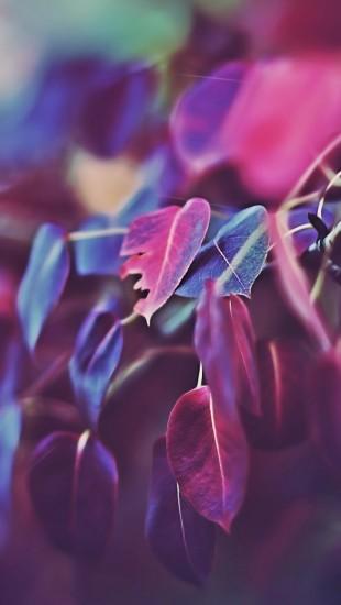 Purple Leaves Bokeh