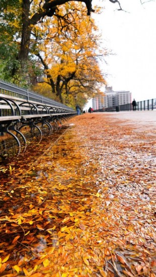 Row of Benches Autumn