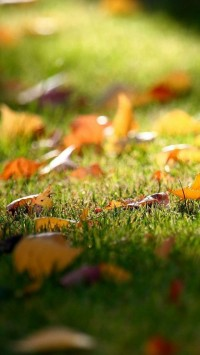 Autumn Leaves Garden
