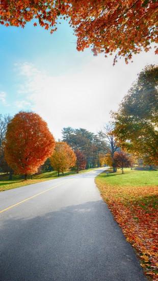 Autumn Tree Road Landscape