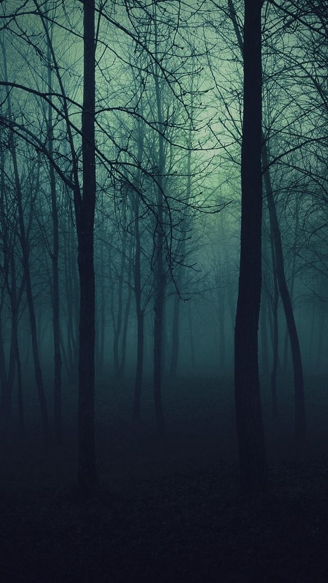 dark places forest trees -#main