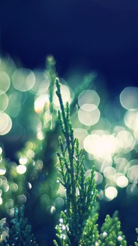 Thuja Occidentalis Bokeh