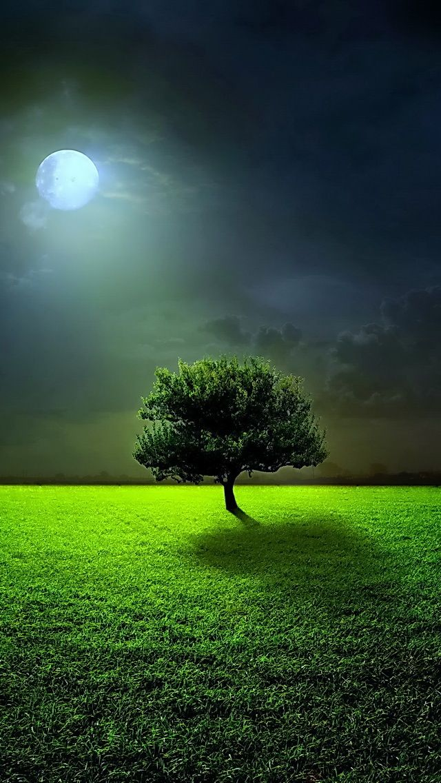 Full Moon Tree The Iphone Wallpapers