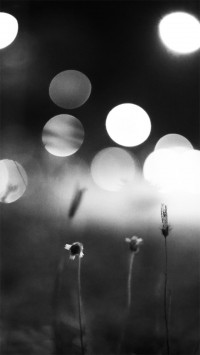 Night Flowers Photography