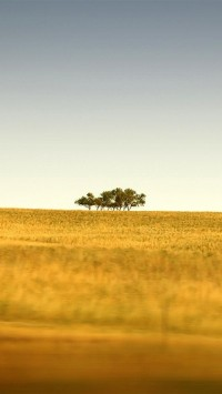 Saskatchewans Only Trees