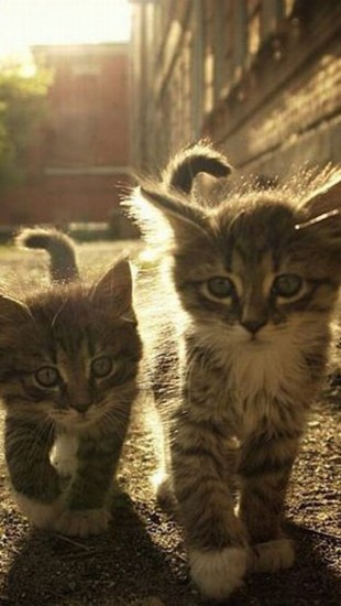 2 Kittens Under The Sunlight