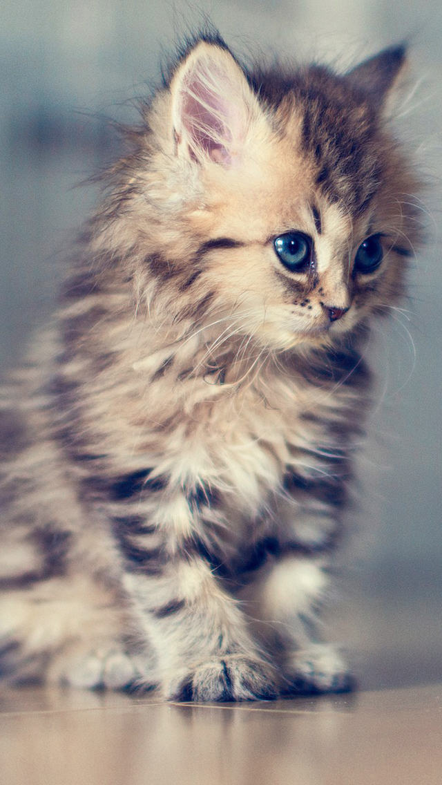 ... kitten iphone wallpaper tags adorable animal cute feline kitten mammal
