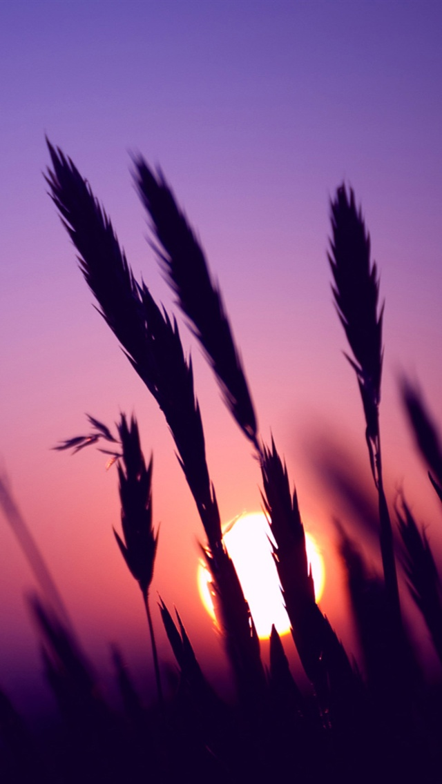 Sunset Purple Sky Grass The Iphone Wallpapers