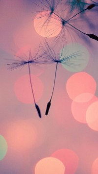 The Dandelion Seeds