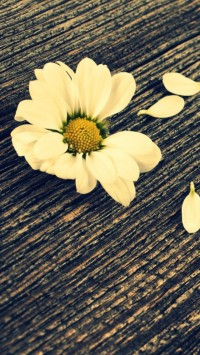 Daisy On Wood