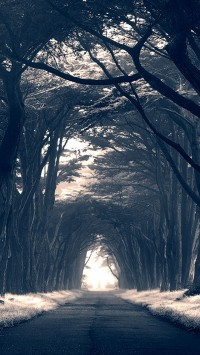 Dark Trees Avenue