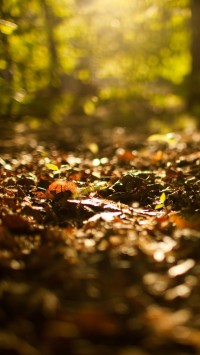 Fallen Leaves on Forest Ground