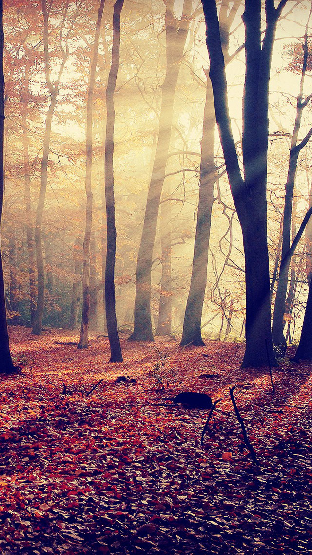 The Iphone Wallpapers Morning Light In Autumn Forest