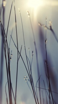 Morning sunlight Water drops