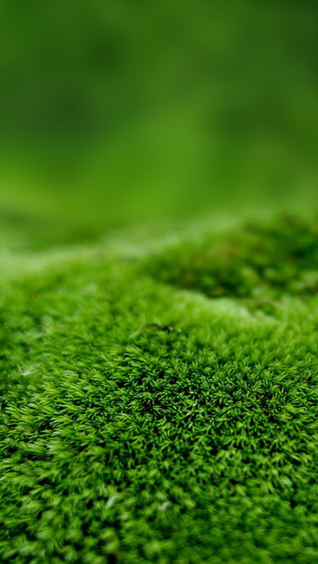 The Iphone Wallpapers Moss