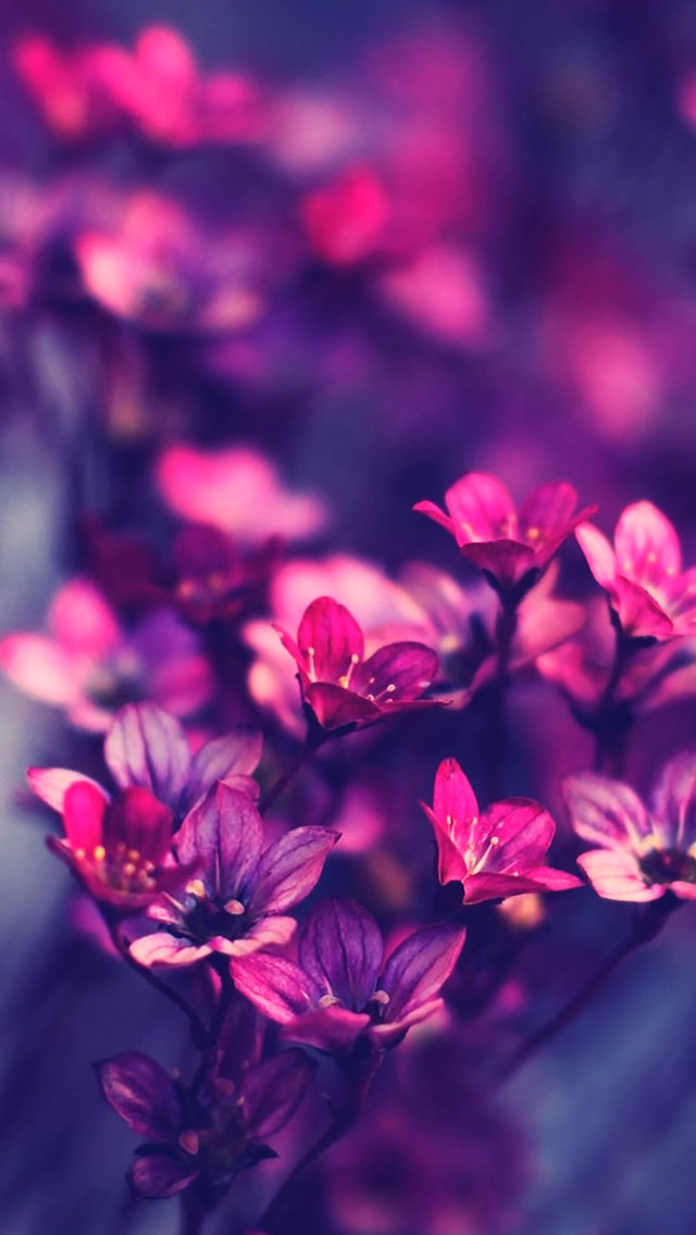 The iPhone Wallpapers » Purple Wildflowers