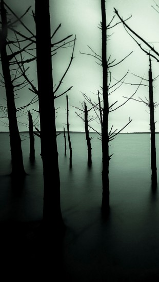 Sunken Forest Lake