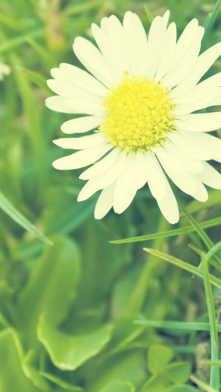 Vintage White Daisy