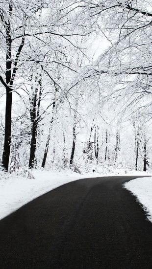 Forest Winter Road