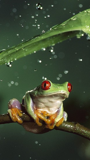 Awesome Frog and Rain