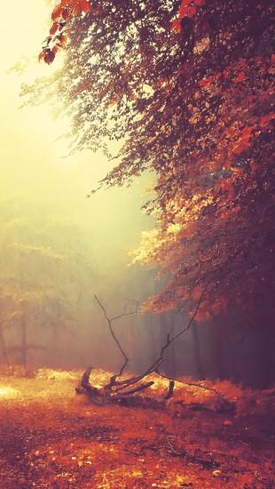 Fog Mist Road