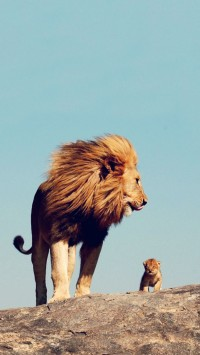 Adorable baby lion with father