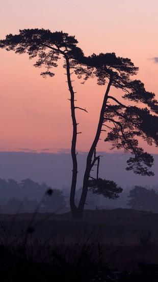 Jungle Sunset landscapes