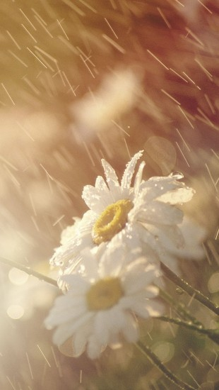Rain Falling on Beautiful Flowers