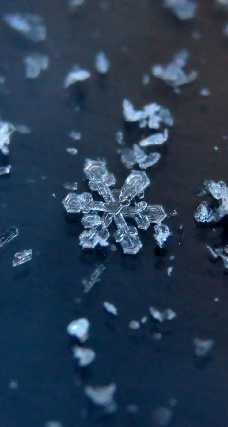 Wallpaper iphone unique - Unique And Beautiful Snowflakes