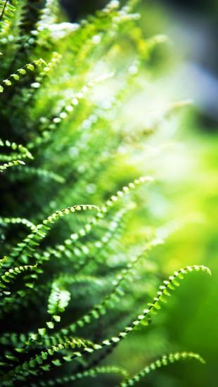 Green Ferns Macro