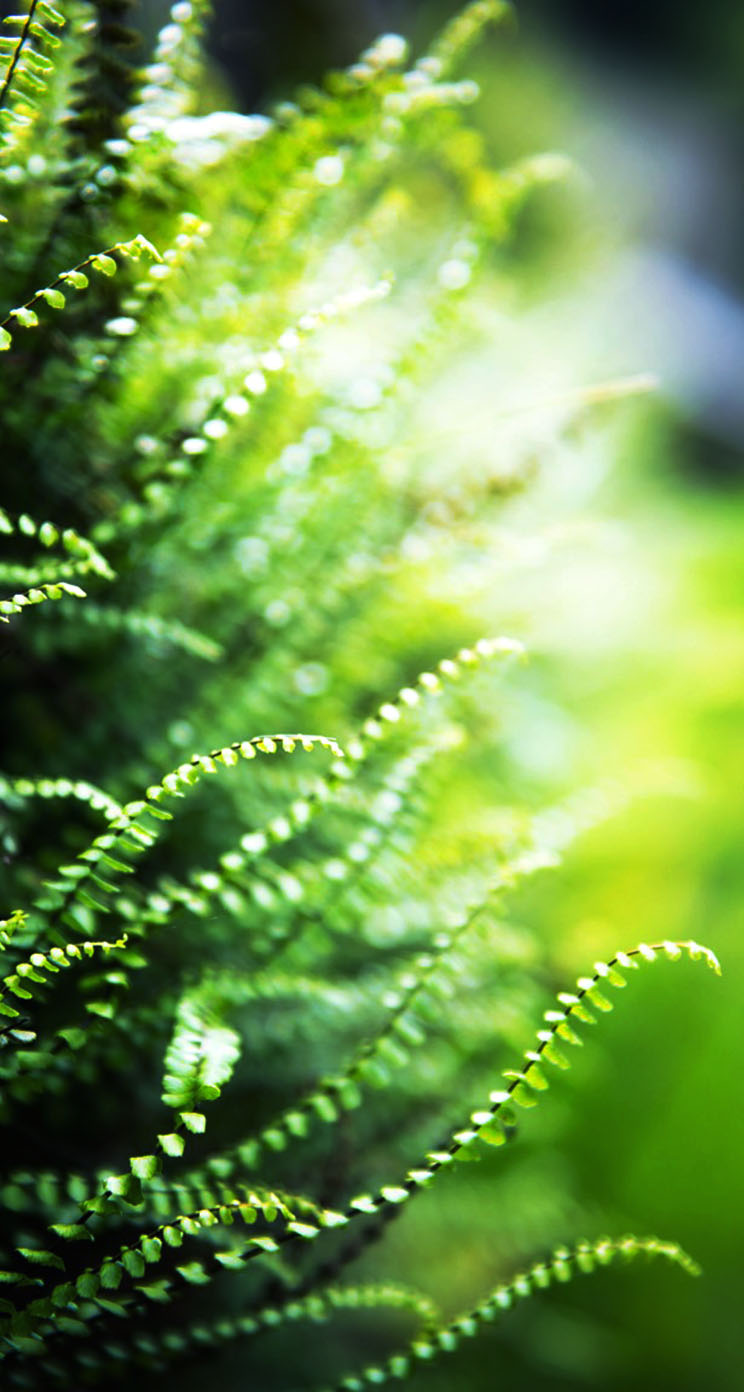 The Iphone Wallpapers Green Ferns Macro