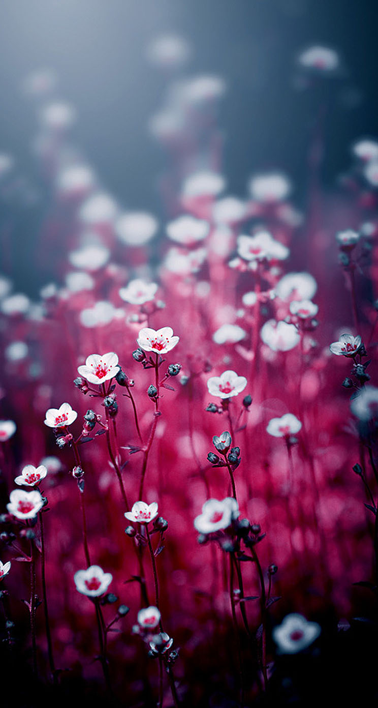 Magical flowers - The iPhone Wallpapers