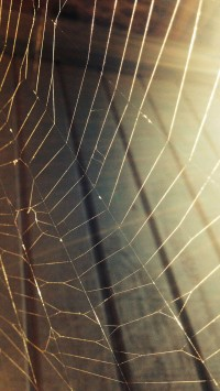 Spiderweb in house