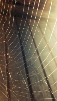 Spiderweb in house