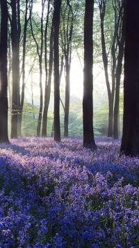 Dawn purple flowers in Forest